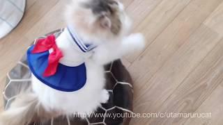 セーラームーンのコスプレを着た猫☆