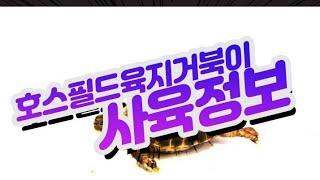 호스필드 육지거북 사육정보