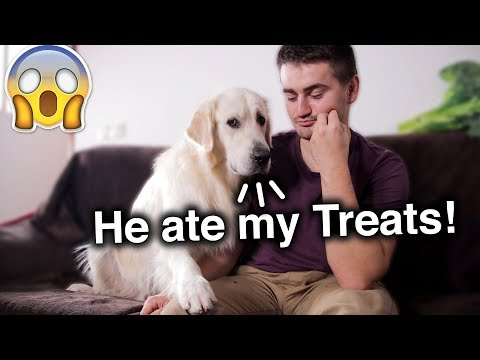 Funny Reaction of My Dog to the Fact That I Allegedly ate His Treats