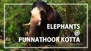 Elephants are camped here - the Punnathoor Kotta