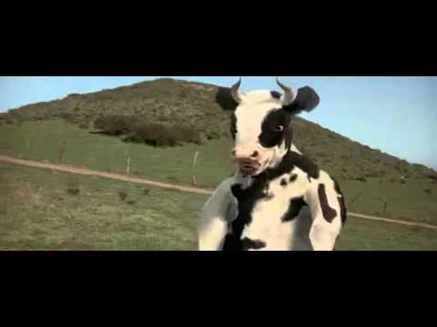 Download kung pow-ninja cow fight.mp4