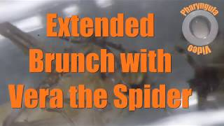 Vera the Spider fusses over brunch