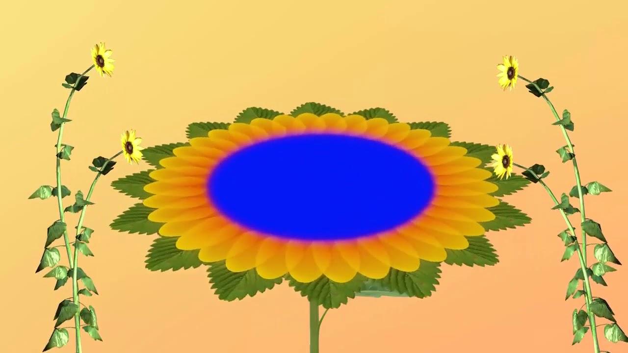 Full HD Blue Screen Effect Flower Wedding frame