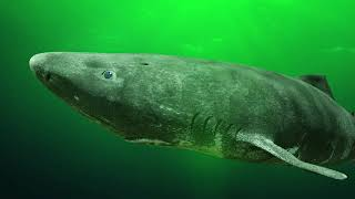 BIGGEST Sharks Ever