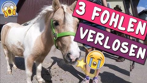 Verlosung 3 Fohlen! ✮ Pferdemarkt 2016 ♥