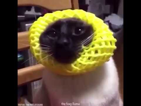 cat with yellow thing on head