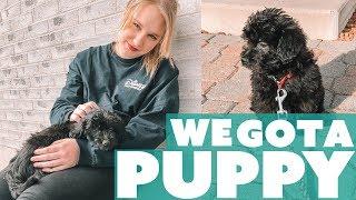 WE GOT A PUPPY!   Puppy Vlog