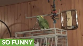 Parrot sings his rendition of classic country song