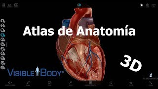 Review: Human Anatomy Atlas de Visible Body (Windows)