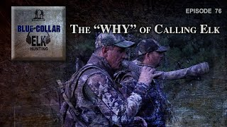 The Why of Calling Elk