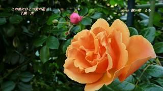 新曲「この世にひとつ 愛の花」 千葉一夫/cover 誠一郎hb 2019年5月15日