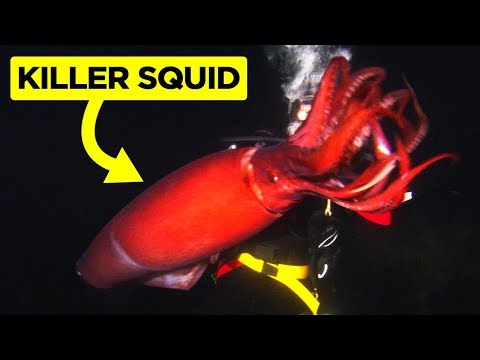 Scariest Videos Caught By Divers