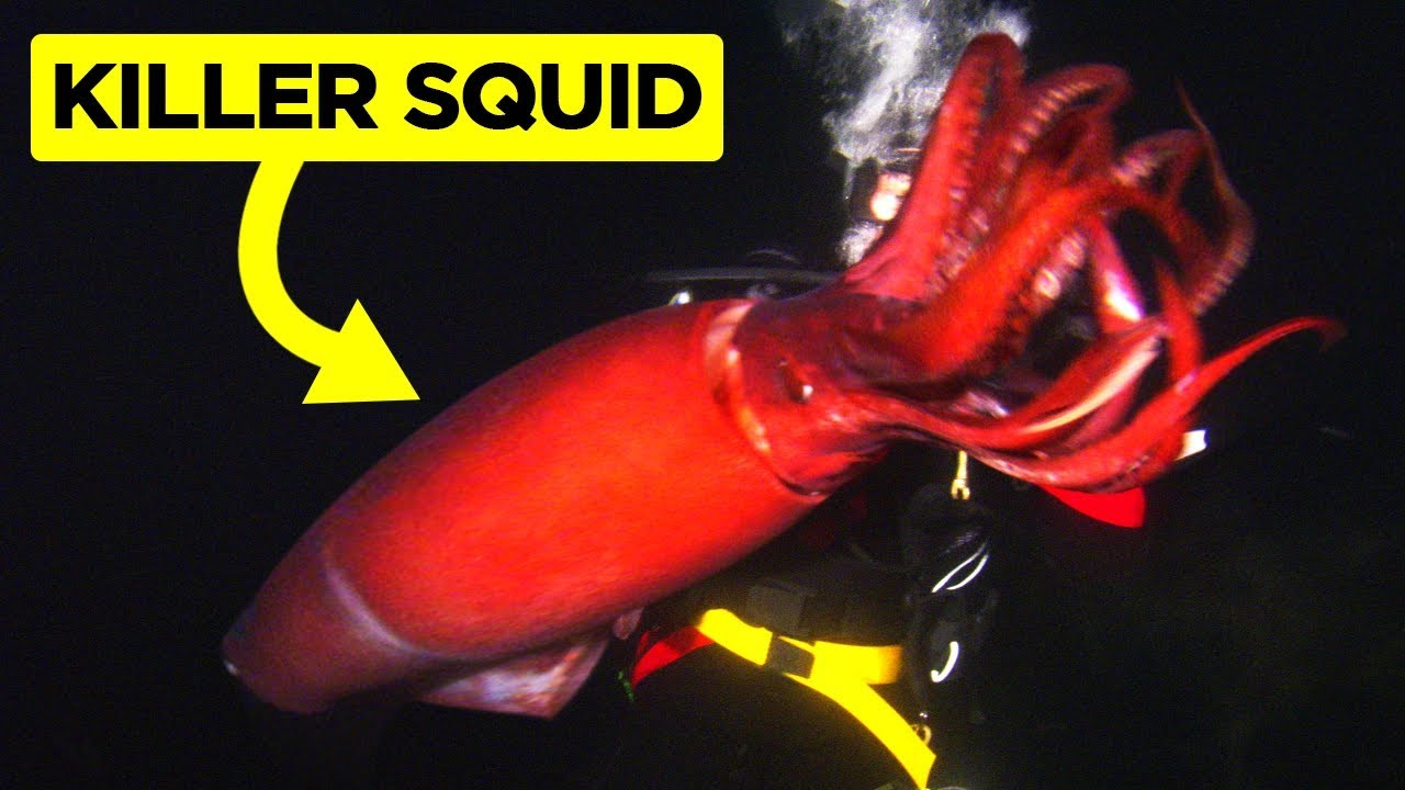 Најстрашните видеа направени од нуркачи