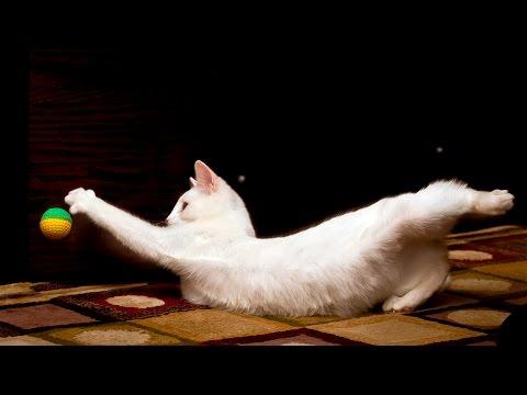 Cute Cats doing Tricks #37
