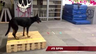 Wendy Bemis Beauceron Trick Dog Champion At Michigan Dog Training