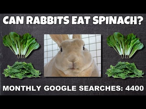 Can rabbits eat spinach? - Play rabbit video