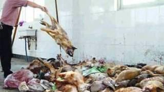 Animal Cruelty Bogdan