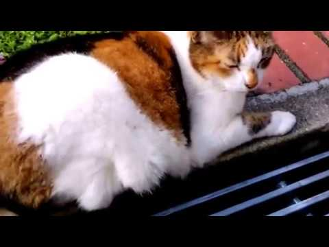cute-cats-youtube