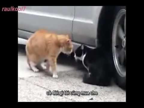 clip hài vô đối_cat love_product by RaulKool