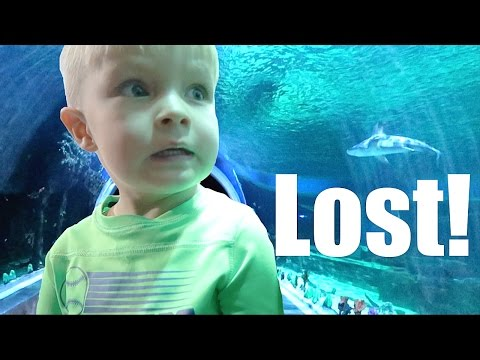 👦🐬LITTLE BOY LOST AT SHARK AQUARIUM😱🐟🐙! DYCHES FAM