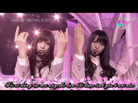 sakura no ki ni narou __ AKB48