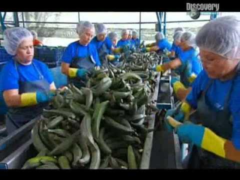 Как делают банановые чипсы на производстве
