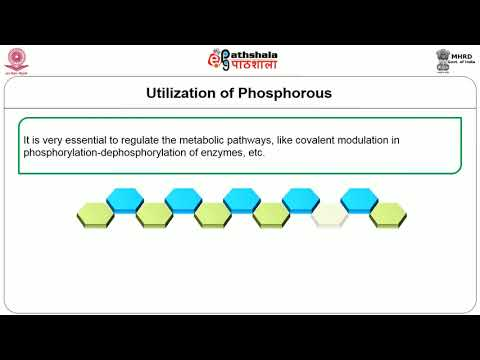 Distribution, absorption, utilization, sources , deficiency and toxicity of Phosphorus