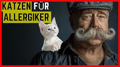 Katzen für Allergiker – Top 7 Katzenrassen ohne Fell & mit Fell
