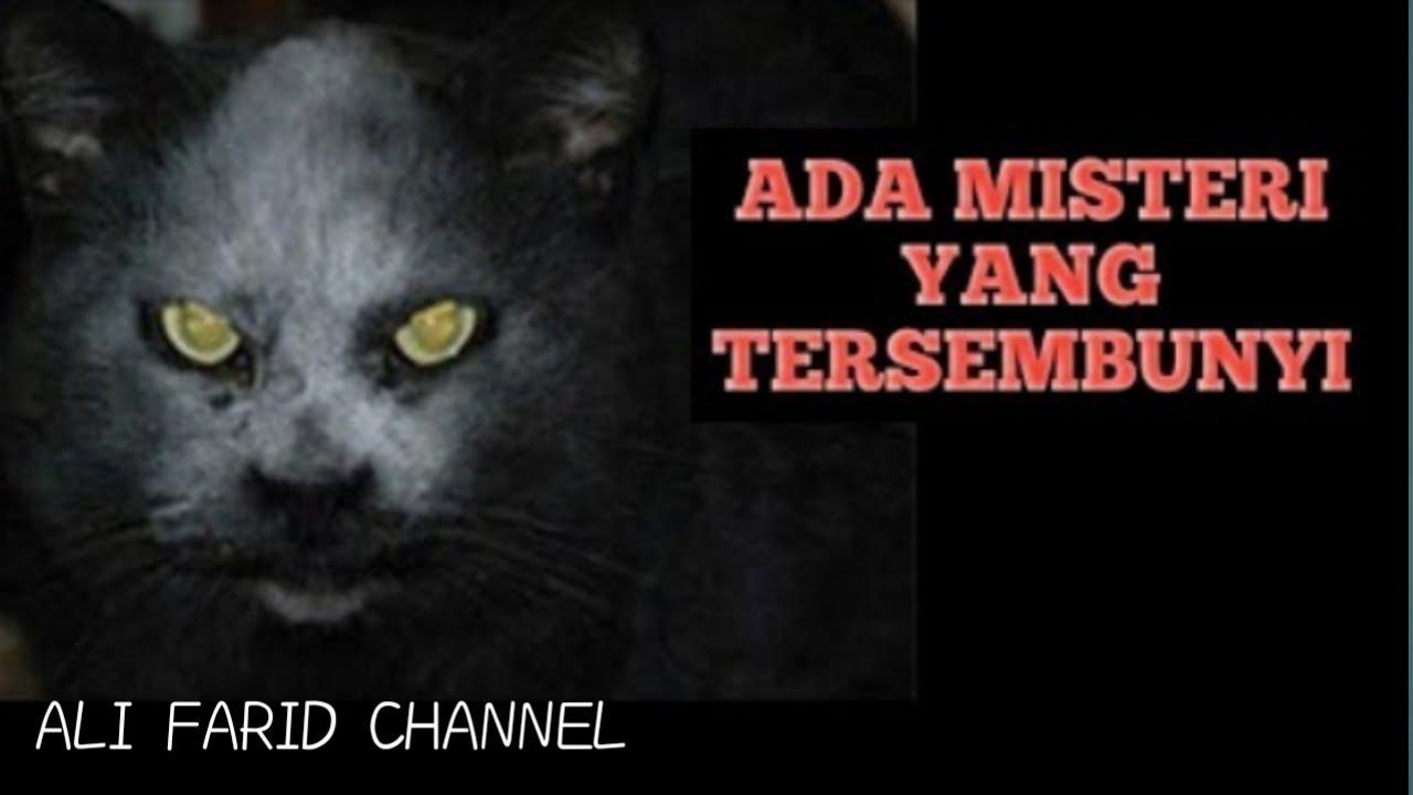 7 Sifat Kucing Sebelum Memelihara Nya Youtube