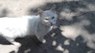 Прикольный кот с разноцветными глазами