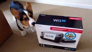 Wii U Confuses Corgi Puppy - Life After College: Ep. 341