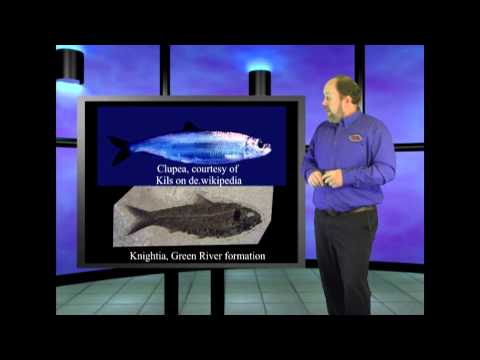 Bacteria Resist Evolution This is Genesis Week episode 19 season 4 with Ian Juby aka Wazooloo