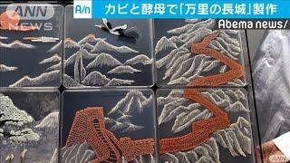 「万里の長城」に鶴が舞う・・・カビと酵母を培養し制作(20/01/05)