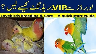 Lovebirds Breeding and Care A Quick Start Guide