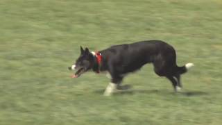 Redwood Empire Sheepdog Championship 2019