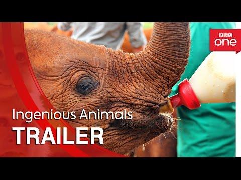 Ingenious Animals: Trailer - BBC One