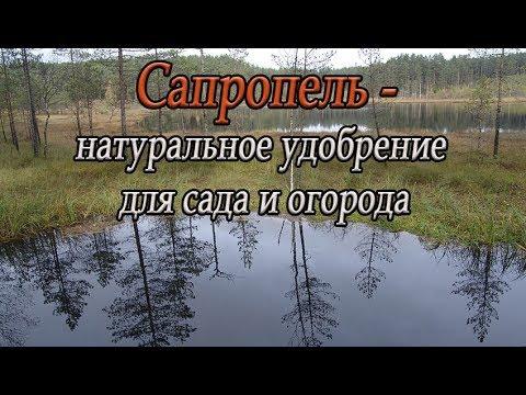 Сапропель - натуральное удобрение для сада и огорода