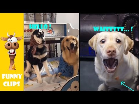 try not to laugh, funny pets, funny clips ep4