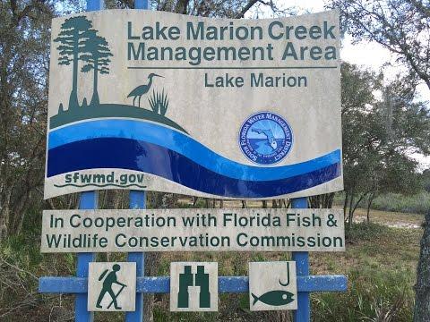 Phantom 3 pro above Lake marion creek wildlife managment area