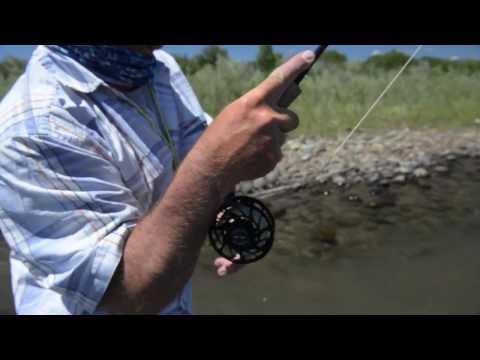 Montana Salmonfly Hatch