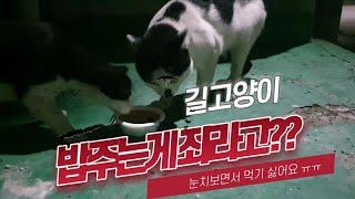 새벽에 도와달라는 임신한 길고양이....(길고양이를 위한 용품을 가져가지마세요.)