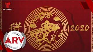 Año de la rata en horóscopo chino: Experta revela sus profecías para el 2020 | Telemundo