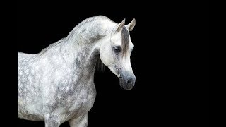 Don't Let Me Down    |Equestrian Music Video|