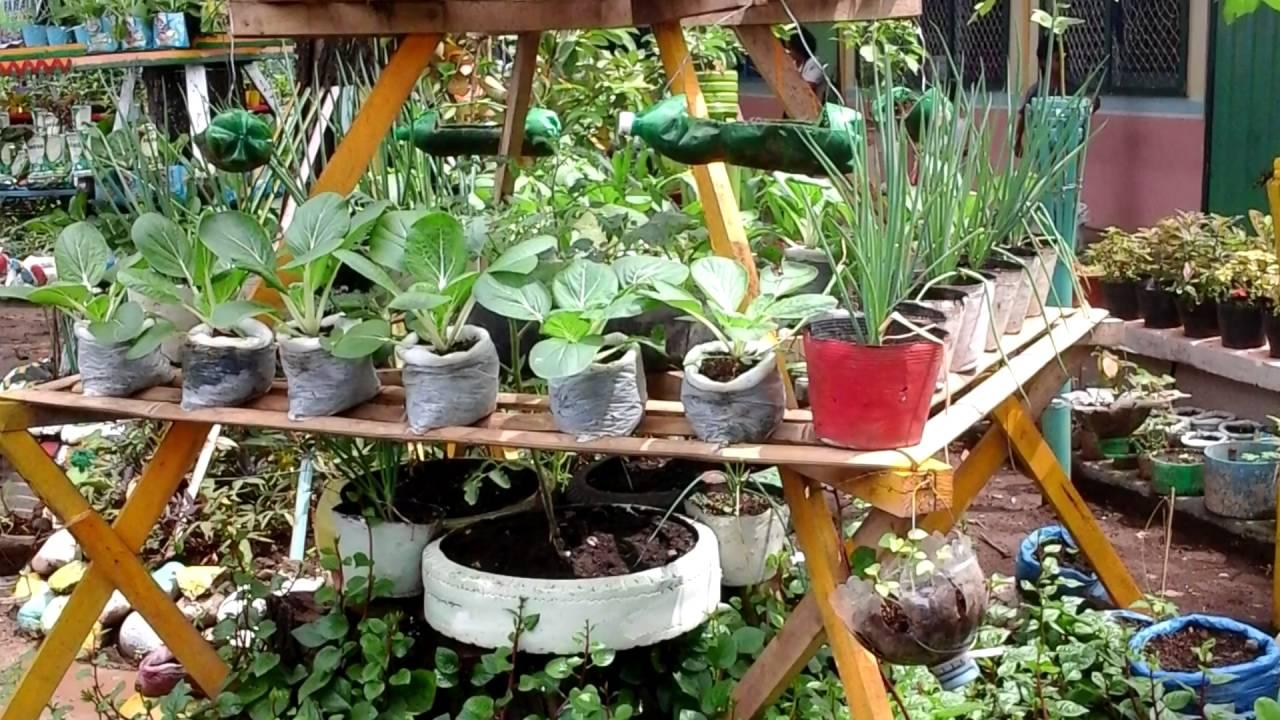 School vegetable gardens - Vegetable Garden In School Of Manuel Lugod Elementary School