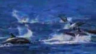 Animal Planet ad Dolphins