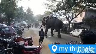 bali-elephant-ride-06 Bali Elephant Camp Ubud