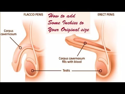 How to increase length of panis