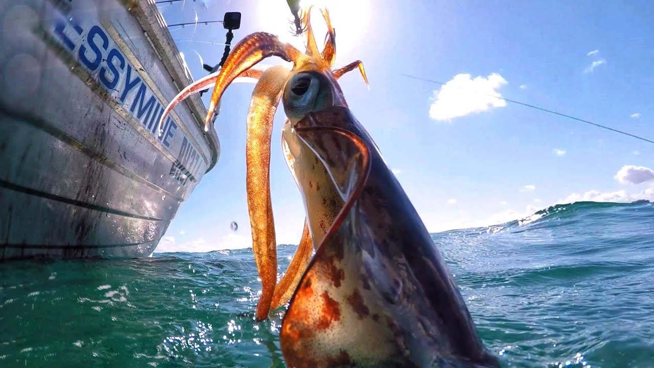 INSANE SQUID Fishing Honey Hole Catch n Cook with Milk
