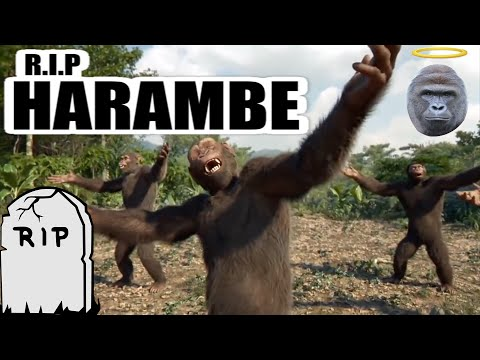 Lit Dance Tribute At Harambe's Funeral! - (Full Video)