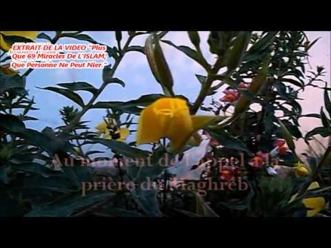 Miracle D Allah Fleur D Azan La Cnn Francais Youtube